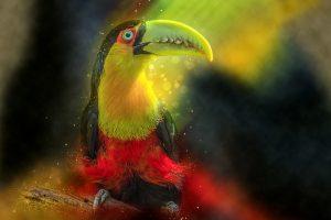 ▷ 10 Significados de Sonhar Com Tucano