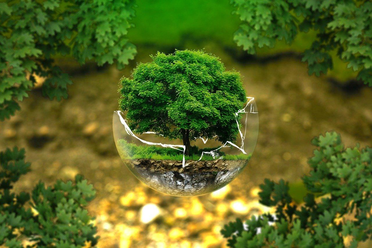 ▷ 20 Frases Dia Da Árvore Para Comemorar 21 De Setembro