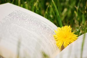 ▷ 60 Frases Sobre Ler – As Melhores