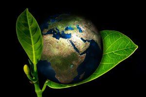 ▷ 50 Frases Sobre Meio Ambiente e a Natureza