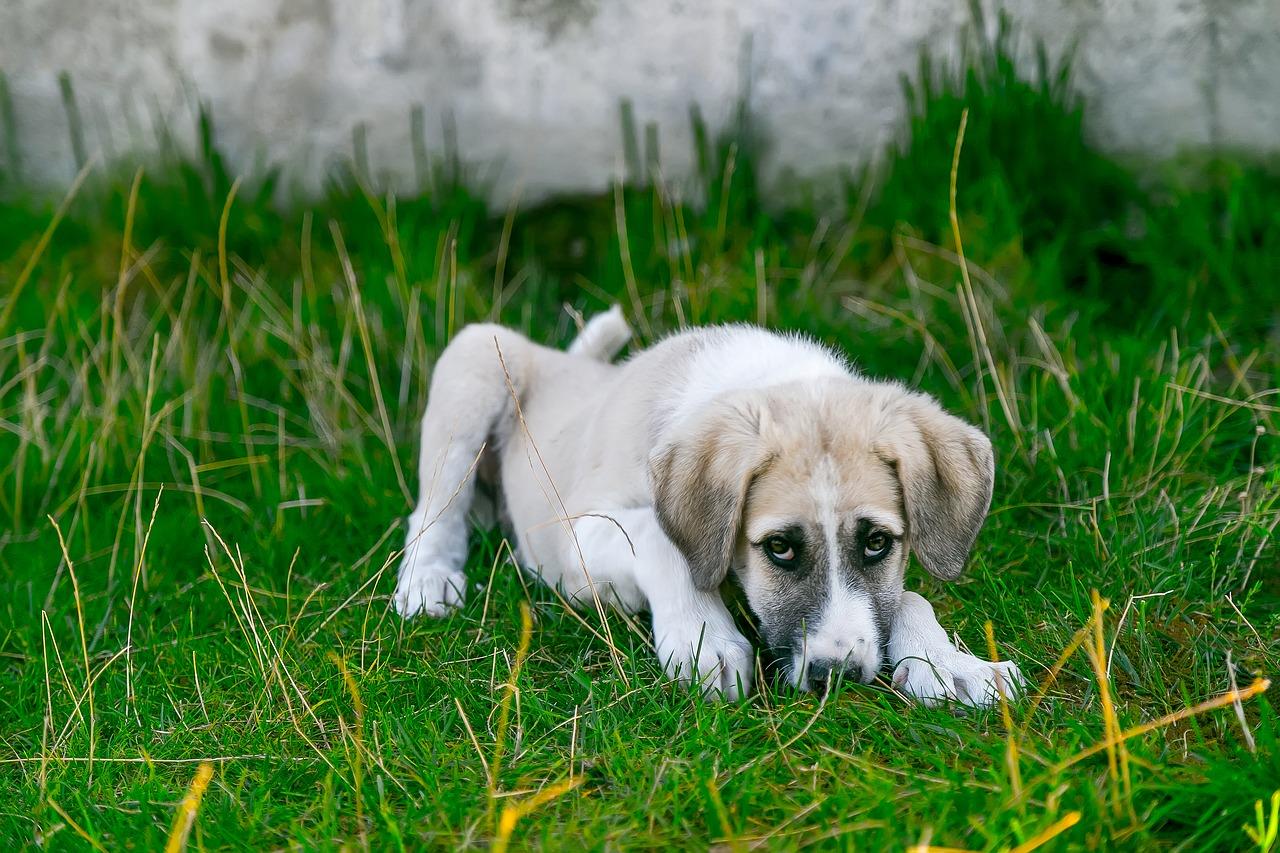 ▷ Oração de São Lázaro Para Curar Cachorro ou Qualquer Animal