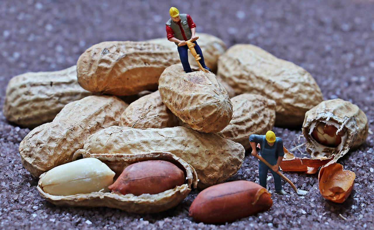 ▷ Sonhar Com Amendoim – Significados Reveladores!