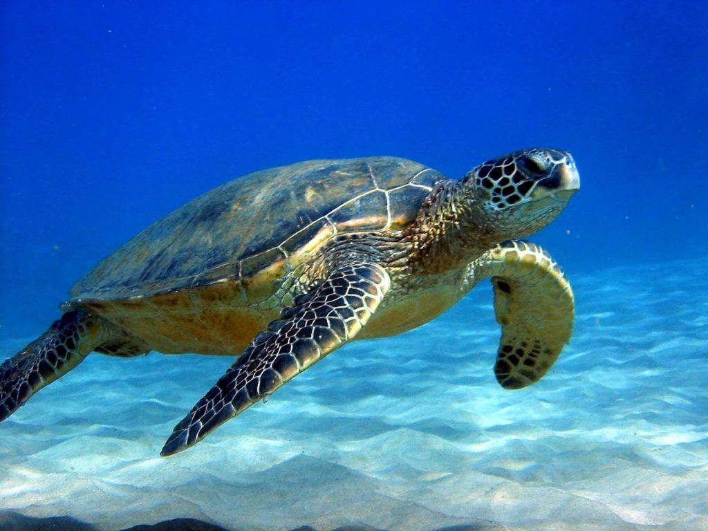 tartaruga marinha nadando no mar