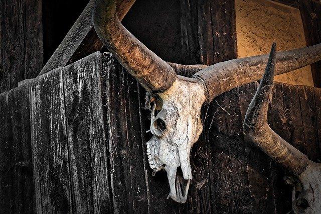 cabeça de boi pendurada na cerca