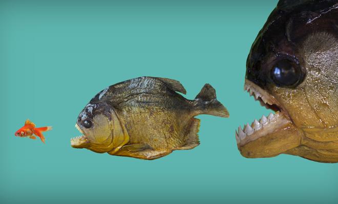 You are currently viewing Sonhar Com Piranha – Significados Ocultos Revelados!